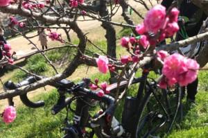 自転車同好会 3月度 佐布里池ツーリング3