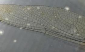 3Dスキャンを活用した「とんぼ、クワガタ、蝉」など昆虫から学ぶバイオミメティクス設計
